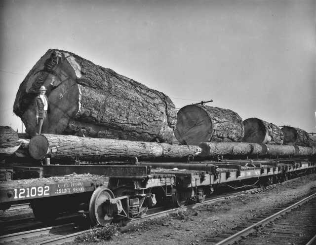 Giant logs on railroad car, October 1935