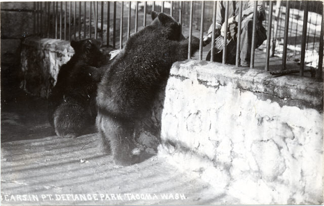 Bears at the Point Defiance Park, c. 1910, front
