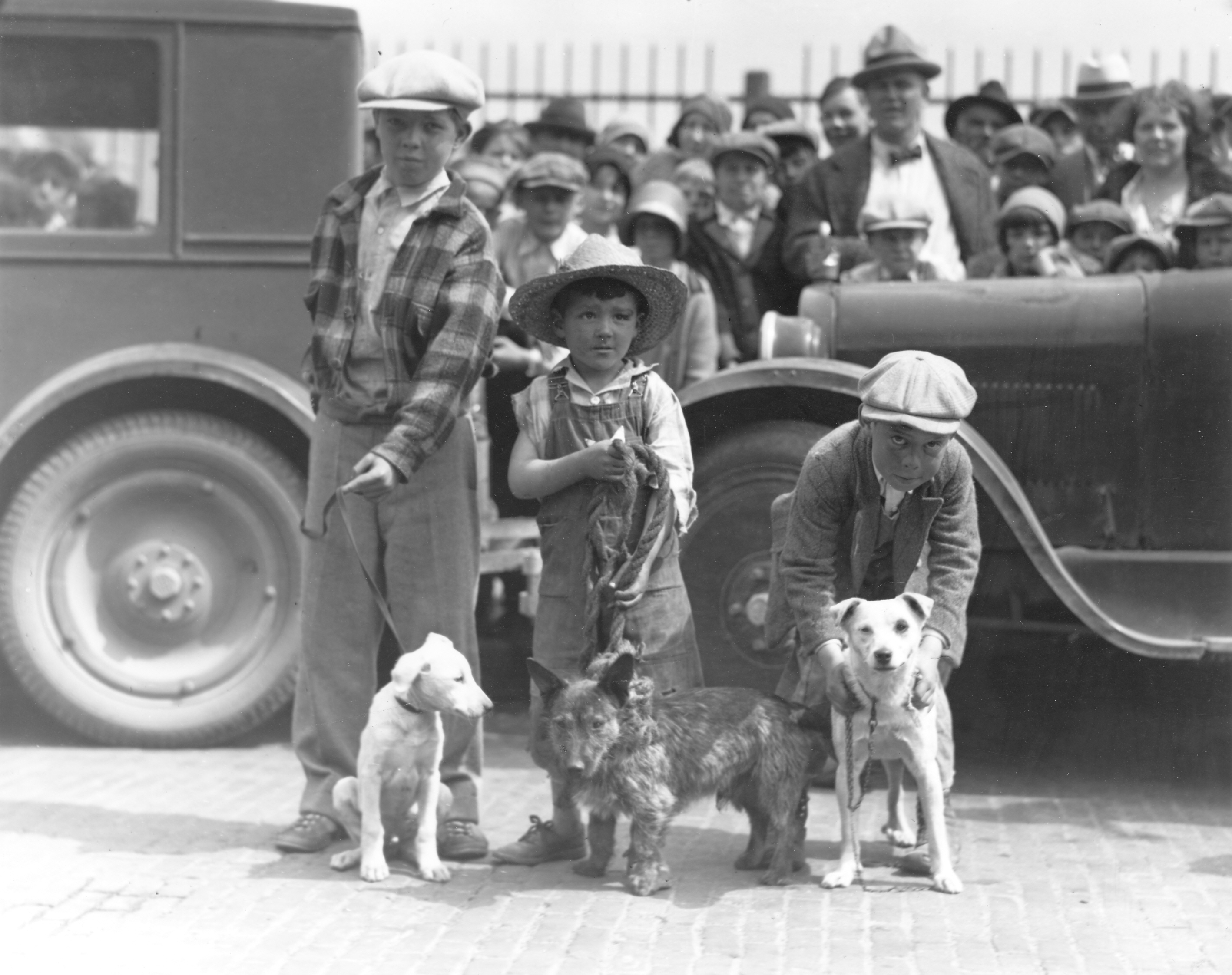 Real Old Fashioned Mutts In 1930 Tacoma Public Library