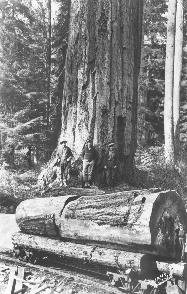 Image of logs and loggers
