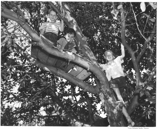 Image of three boys climbing a tree